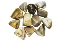 Bois fossilisé - pierre roulée