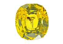 #ambre #amber #insect #0.96ct