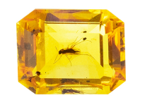 #ambre #amber #insect #1.07ct