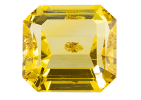 #ambre #amber #insect #1.38ct