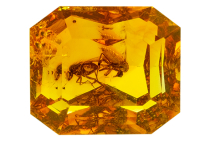 #ambre #amber #insect #1.50ct