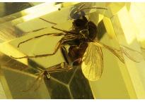 Ambre à insecte 0.74ct
