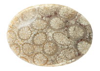 Corail fossile 17.01ct
