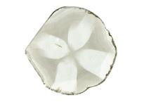 Diamant Trapiche
