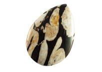 Bois fossile - Peanut Wood 65,20ct