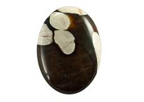 Bois fossile - Peanut Wood 23.78ct