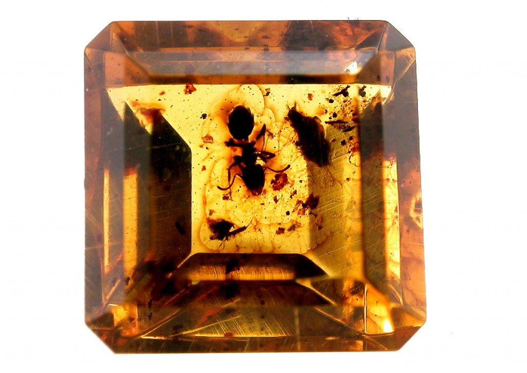 Ambre à insecte- Amber with insect