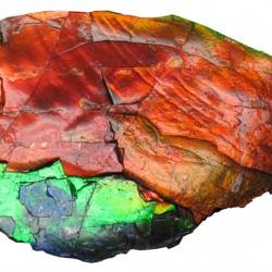 Ammolite-(Placenticeras-fossil-ammonite)-–-Image-credit-to-James-St.2
